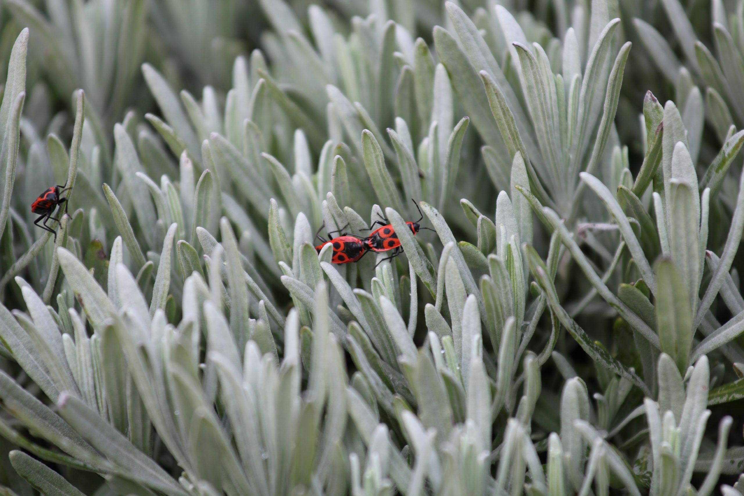 Slaapkamers - insectenwering
